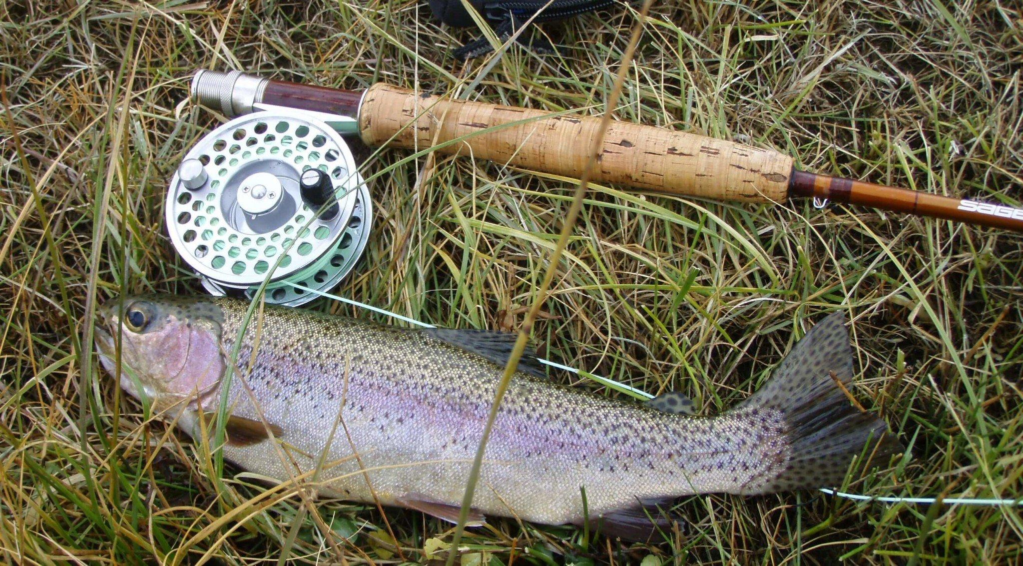 rainbow-trout-609551