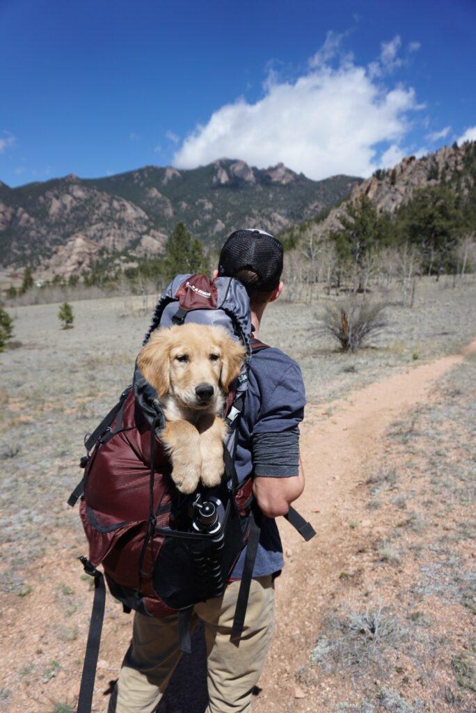 backpack with doggo